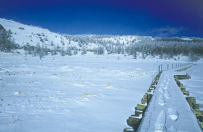 冬の池の平湿原